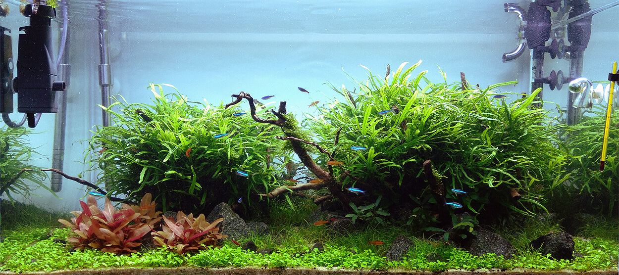 So wachsen Wasserpflanzen – Aquarium Licht