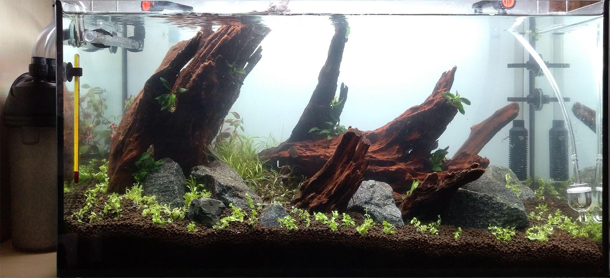 Und noch ein Layout — Green Wood