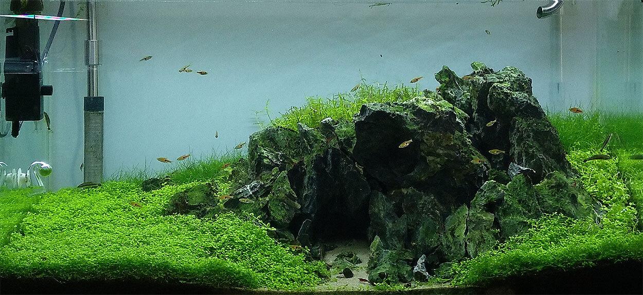 Algenplage im 128-Liter-Aquarium