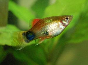 Für aquarium anfängerfische 60l AQUARIUM GUIDE