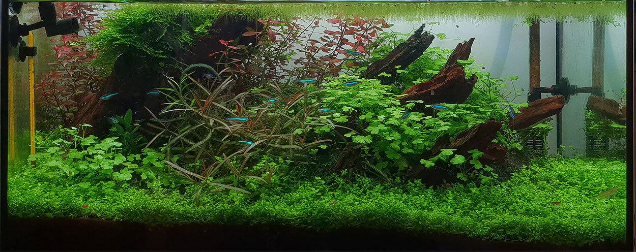 Green Wood – das Update nach 100 Tagen
