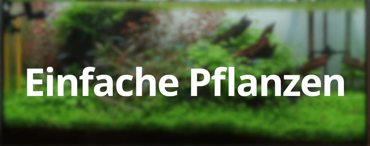 Faq Welche Pflanzen Eignen Sich Fur Einsteiger Aquarien Tipps De