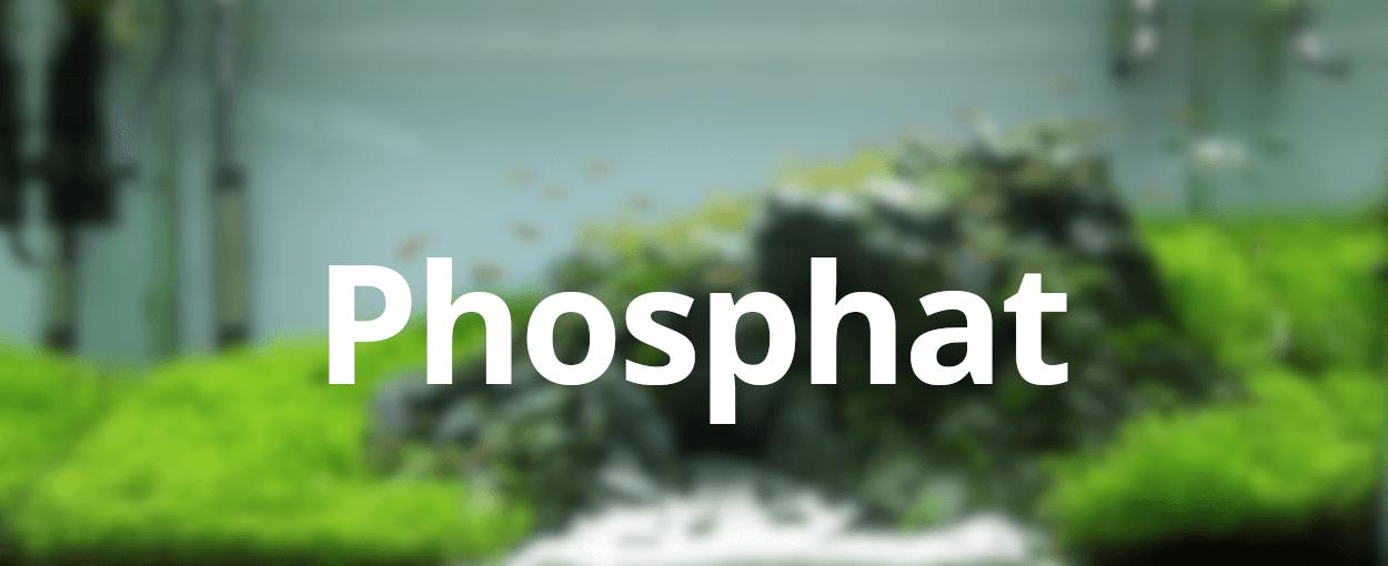 FAQ: Welche Wasserwerte sind ideal? – Phosphat