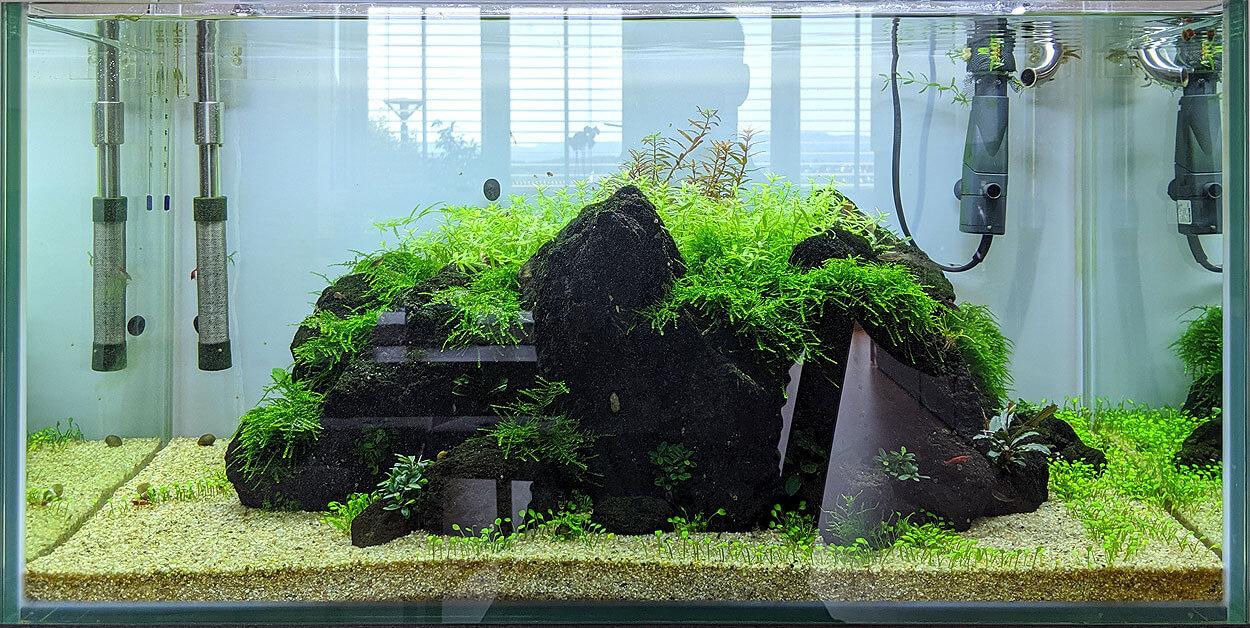 Black Rock Aquascape nach acht Wochen